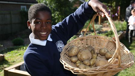St John's School Digswell pupil Alex Sewell, 10 with potatoes in the new Sensory and Wellness garden