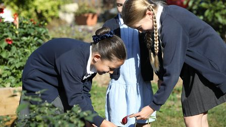 Pupils look around during the opening of St John's School Digswell Sensory and Wellness garden. Pict