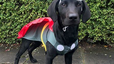 The lord of thunder/apprentice fire investigation dog. Picture: HCC.