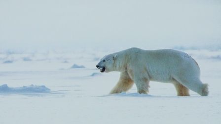 Wildlife photographer Danny Green showcased his best work from the Arctic at the November meeting of
