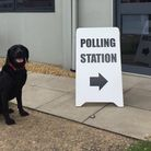Hertfordshires fire dog Req taking his pawsome snap outside his polling station in 2017. Picture: He