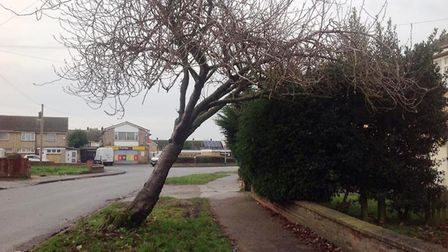 Ollard Avenue, Wisbech, where this tree looks perilously close to falling over. Picture; SUBMITTED