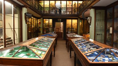 Dig deep on the hunt for real dinosaur relics at Wisbech Museum event. Picture: ARCHANT