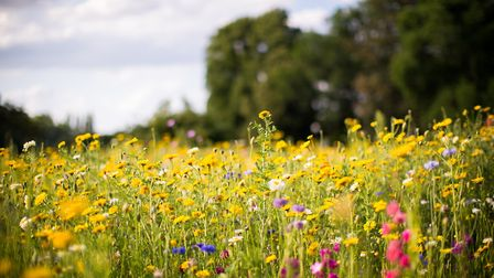 A meadow of wildflowers. Picture: Getty Images/iStockphoto