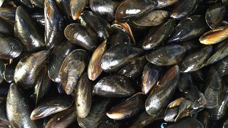 Fenland District Council has put a ban on shellfish harvesting after discovering bacteria at the mou