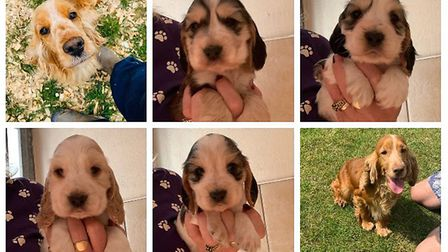 Fourteen dogs and puppies have been stolen in Upwell.