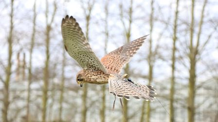 Fens Falconry has submitted a planning application to expand its centre in Wisbech St Mary, Cambs, t
