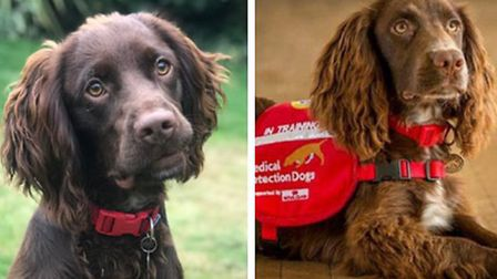 Jasper (L) and Norman (R) originally from Wood Green are taking part in a UK trial to find out if sp
