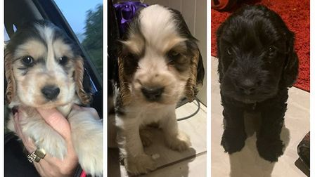 Back home, safe and sound. Three puppies that were stolen from JustDogz kennels in Upwell have been