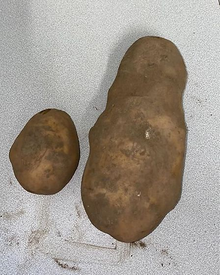 Compared with a normal spud. Picture: Supplied/Jessie Lynn