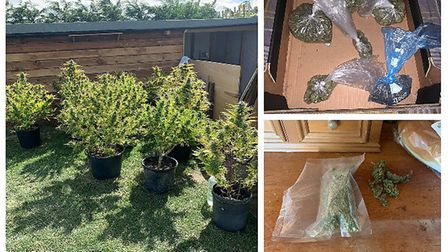 Police found 11 cannabis plants being grown outdoors while on patrol at Elloe Bank, Wisbech. Picture