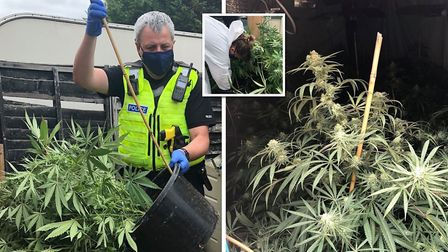 A woman in her 40s was arrested on suspicion of cultivating cannabis after 47 seven cannabis plants