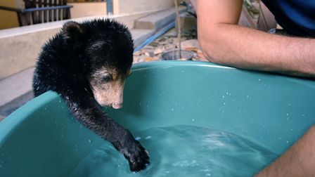 Mary the Sun Bear in Bears About The House. Picture: BBC