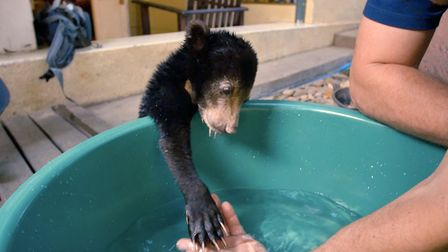 Mary the Sun Bear in the first episode of Bears About The House. Picture: BBC