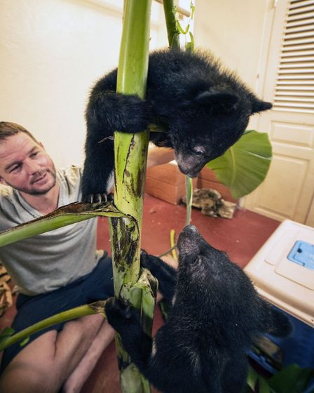 Rescued Moon Bear cubs David and Jane in Bears About The House. Picture: BBC/Cherique Pohl