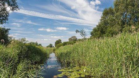Wicken Fen. Picture: NATIONAL TRUST