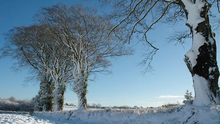 Learn to identify trees even in winter – like these at Uplyme captured in a prize winning series of