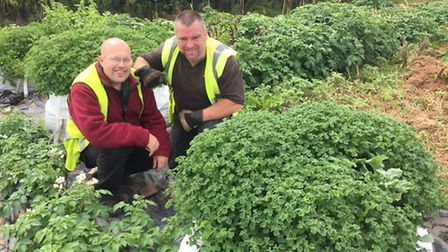 Paul Darlow and Dean Mallon, of Otter Rotters, with a trial crop.