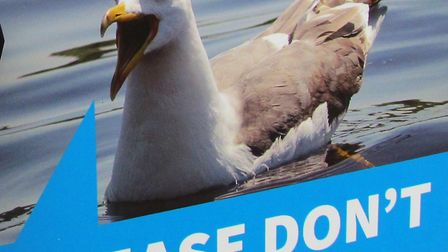 Feeding seagulls is being banned in public places in West Dorset. Picture: SUBMITTED