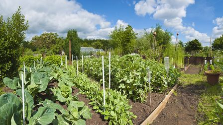 Around 80 people in Honiton are waiting for the opportunity to cultivate their own allotment. Photo: