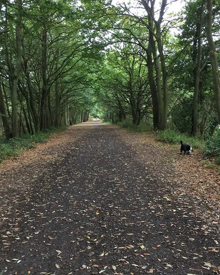 Along the Budleigh to Exmouth cycle track. Picture: Sue Babb