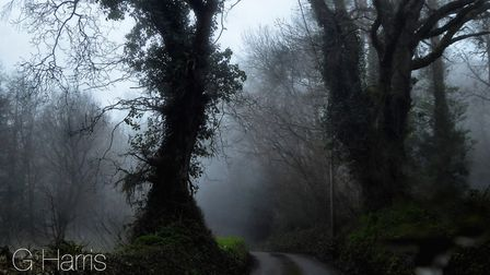 Mystical and majestic! Picture: Gilly Harris
