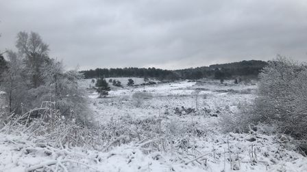 Woodbury Common, outside Exmouth. Picture: Dan Wilkins.