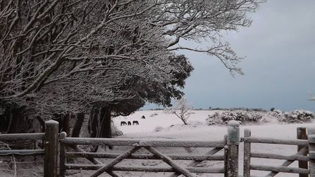 Beautiful scene at Peak Hill, Sidmouth. Picture: Sharon Butler