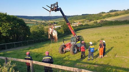 FIre crews from Seaton and Exmouth helped to rescue a horse stuck in mud in Axmouth. Picture: Contri
