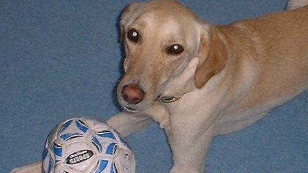 Police are hoping someone might remember Prince, Catherine Nee's yellow Labrador.