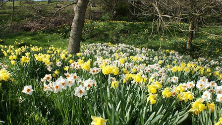 Hartland Abbey will be bursting with spring colour.