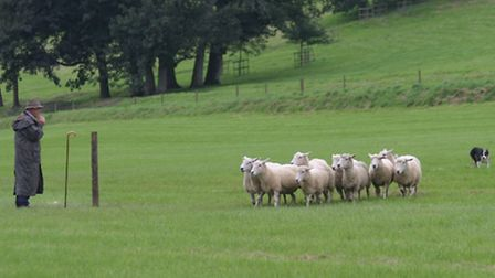 The 2009 English National Sheepdog Trials at Filleigh's Castle Hill Estate were deemed a huge succes