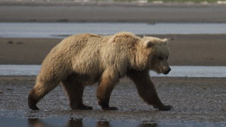 A scene from Johnny and the Bears, a one hour special on BBC Four on Wednesday, February 27.