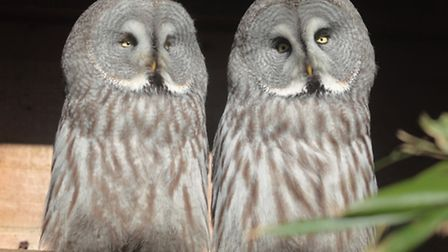 Grey owls could be moving in to new aviaries at Exmoor Zoo if permission to add extra enclosures is