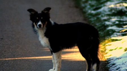 Skip has been missing from Brocken Barrow Farm in Challacombe since March 23.