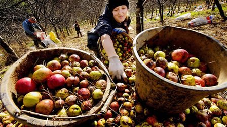 Guy Harrop's picture of harvest time at Ostlers Cider Mill, near Goodleigh, won first prize in the F