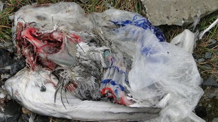 What appears to be a dead bird in a carrier bag is among the rubbish left at the side of the power s