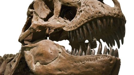 Fun with fossils at Ilfracombe Musuem on Friday, May 31.