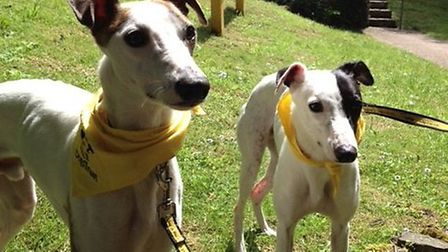 Ronnie and Reggie are friendly, affectionate and just need a loving home.