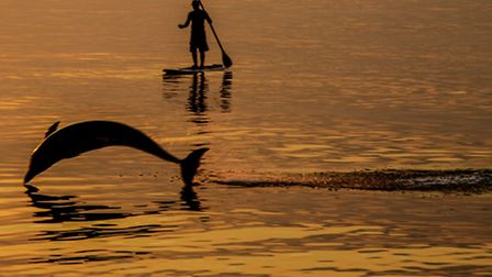 The dolphins at Combe Martin, photographed by Andrew Pettey.