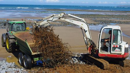 The spikes being excavated from the pebble ridge.