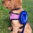 A four-legged visitor at the K9 Focus Braunton Dog Show earlier this summer. Picture: Nick Hall.