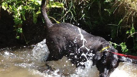 Nina loves having fun splashing about in the water at Dogs Trust Ilfracombe.