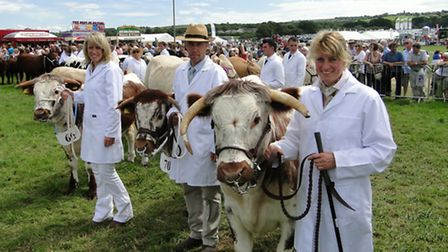 Shorthorn cattle take centre stage at the 2011 show.