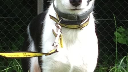 Can you provide a home for Tinker?
