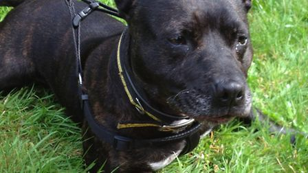 Affectionate Jessie is looking for a home, ideally one with plenty of squeaky toys!