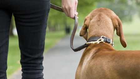 The number of stray dogs in North Devon and Torridge has fallen. Pic for illustration purposes.