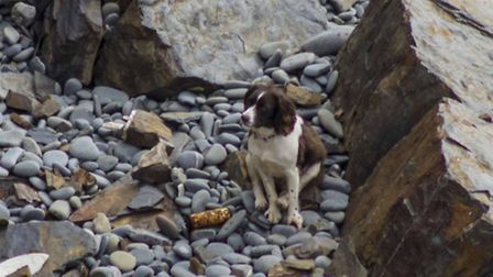 A shocked Tia sits at the bottom of the cliffs at Hartland Quay. Picture: Carl Hudson.