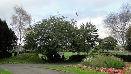 The spot where the memorial will stand - the hedge will be removed and the memorial placed there.