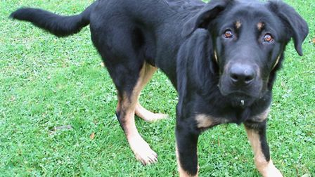 Spike is an exuberant six-month-old pup who loves everyone he meets.